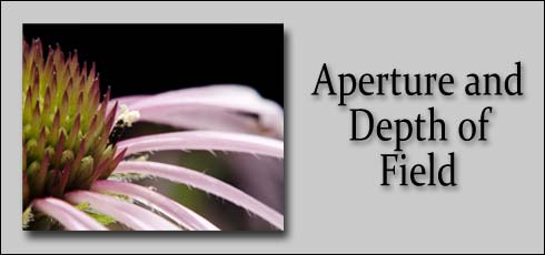 1-4: Aperture and Depth of Field